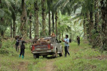 nông dân Thái Lan