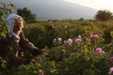 """Định cư Bulgaria - Cơ hội đắm mình trong """"Xứ sở hoa hồng"""""""